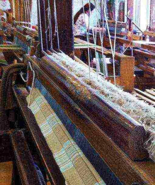 какой вид льна выращивают для изготовления волокон
