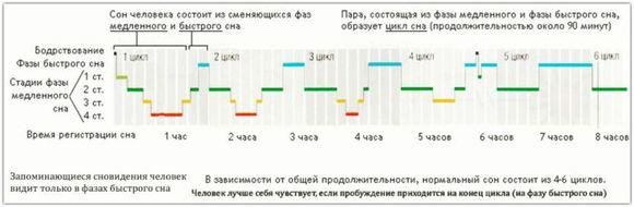 таблица циклов