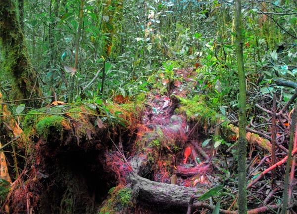 В таком лесу заблудиться можно буквально в 3-4 метрах от тропы.