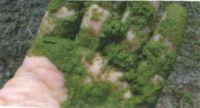 иловые осадки