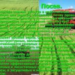 Биологические и морфологические особенности озимой пшеницы