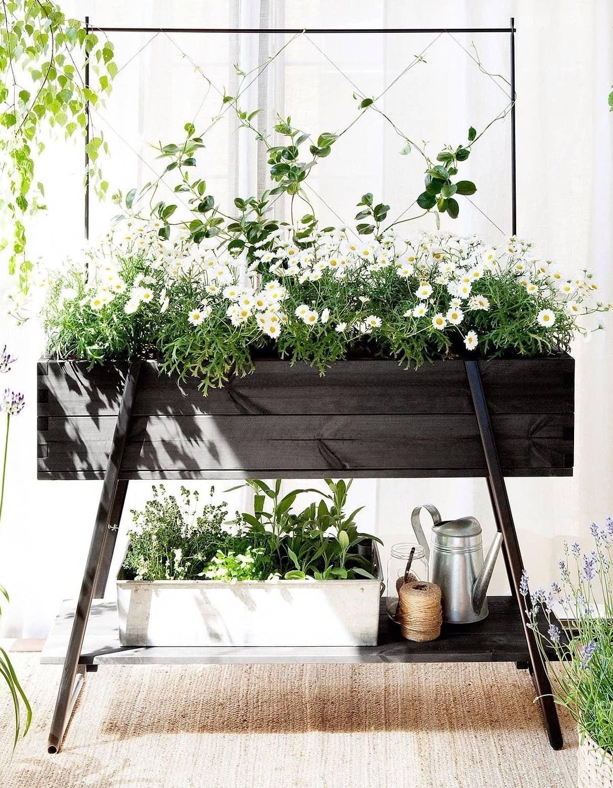 Белые ромашки всегда привлекают внимание, особенно если их высадить в красивый напольный кашпо