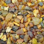 Цвет и разновидности янтаря