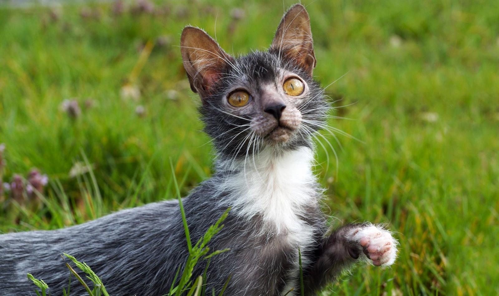 неухоженная страшная кошка